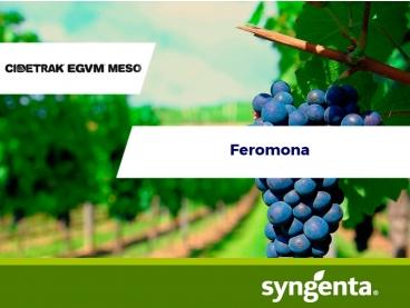 Feromonas Cidetrak® EGVM MESO