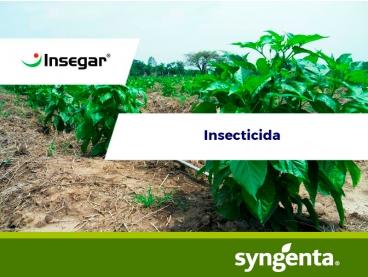 Insecticida Insegar® 25 WG
