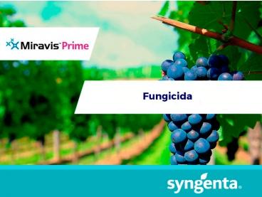 Fungicida Miravis™ Prime