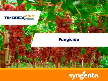 Fungicida Timorex® Gold