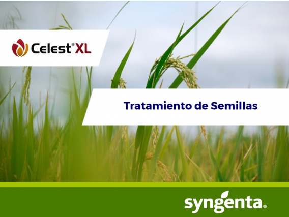 Fungicida  Celest® XL 035 FS