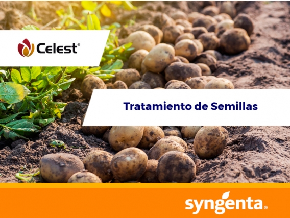 Fungicida Celest® 025 FS