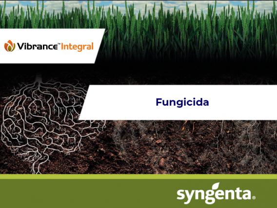 Fungicida - Insecticida Vibrance® Integral