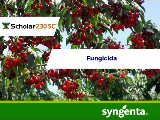 Fungicida Scholar 230 SC